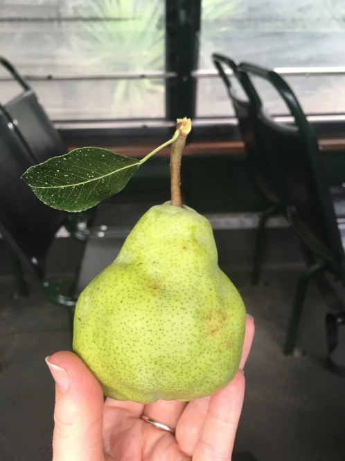 Scrumpy pear